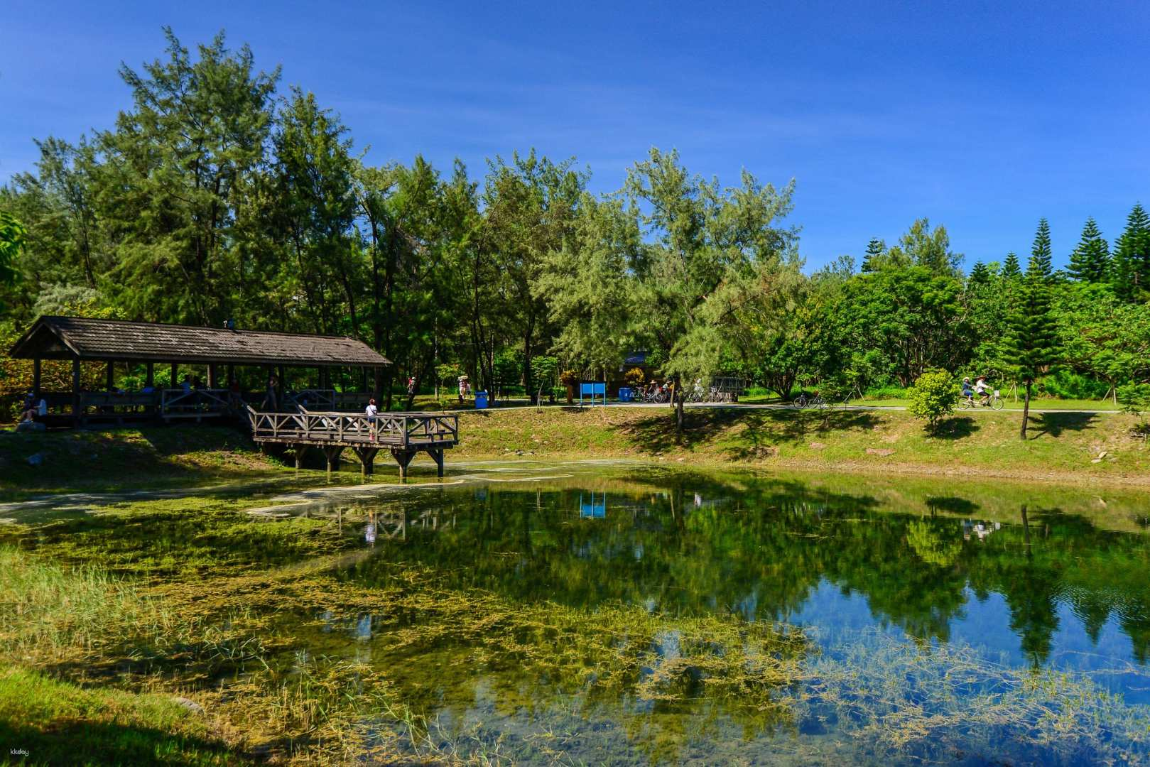 台東-鸞山森林博物館,水往上流,台東森林公園  包車一日遊
