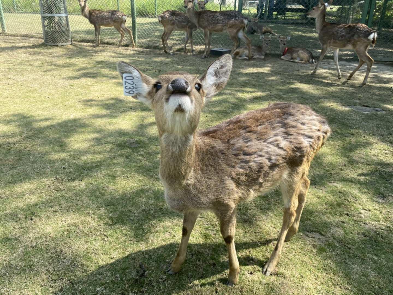 嘉義-阿里山逐鹿傳說梅花鹿園&DIY體驗| 即買即用